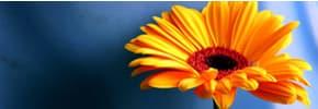 Цены на Цветы и растения, фото