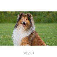 Фото Стрижка/груминг собак крупные породы