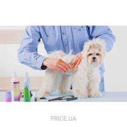 Фото Стрижка/груминг собак средние породы