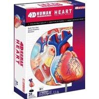 Фото 4D Master Сердце Анатомия человека (26052)